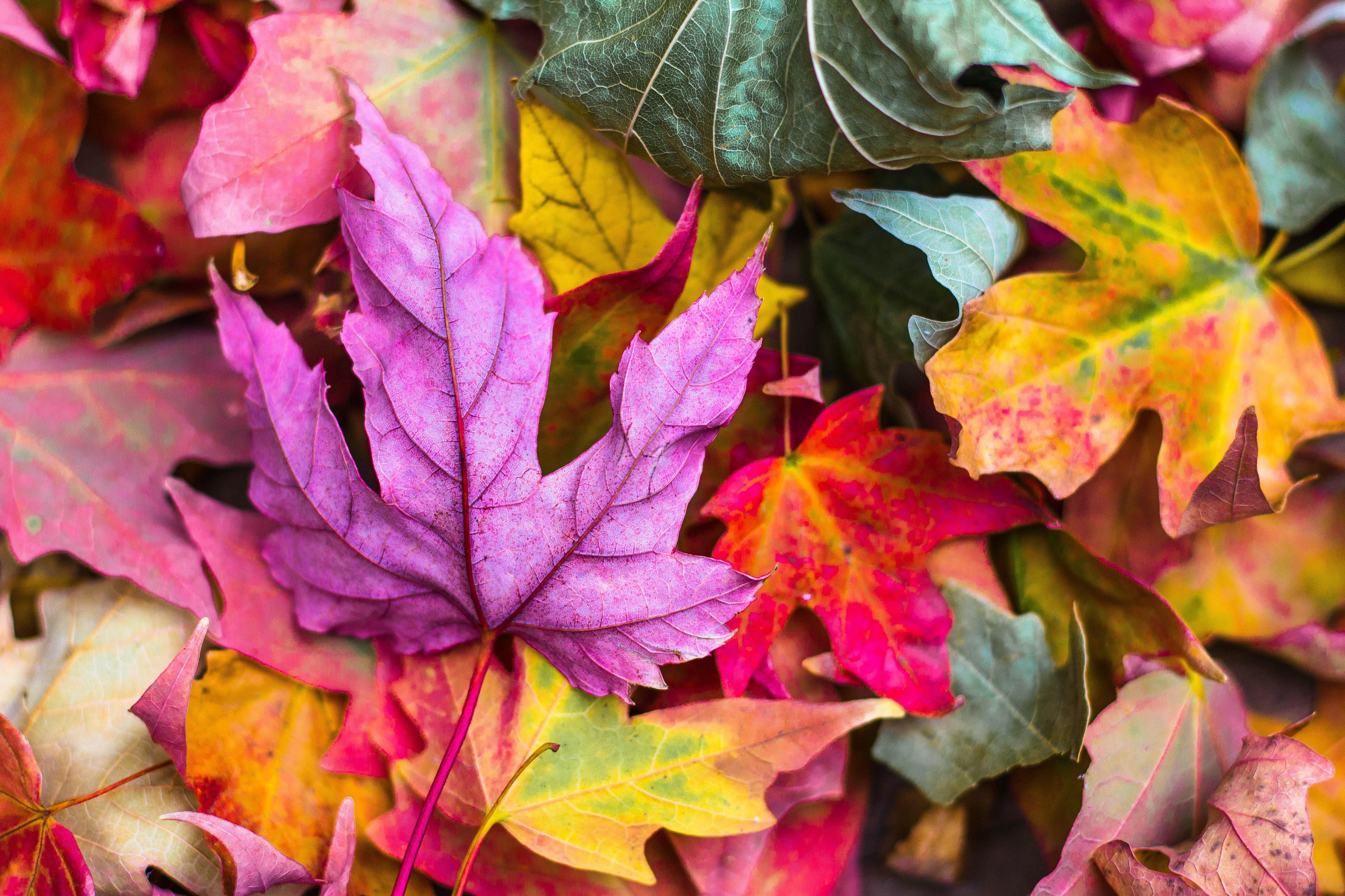 Play! Hello Autumn!
